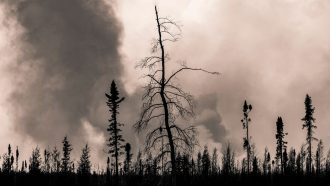 'Zombie' wildfires can reemerge after wintering underground