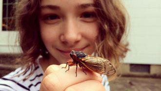 Explainer: What are cicadas?