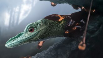 Ancient creature revealed as lizard, not a teeny dinosaur