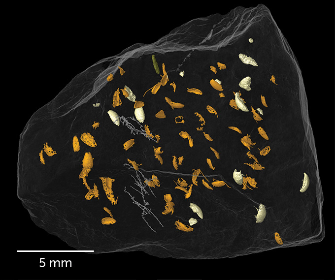 3D rendering of beetle remains in fossilized dung