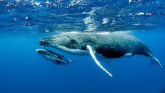 Let's learn about whales and dolphins