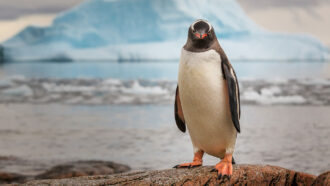 Let's learn about Antarctica