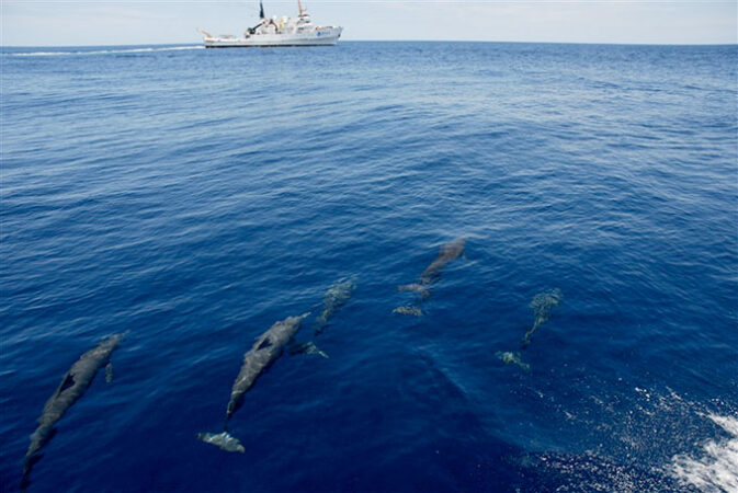 a photo of a pod of dolphins at the bottom of the picture swimming towards a research vessel in the top left corner