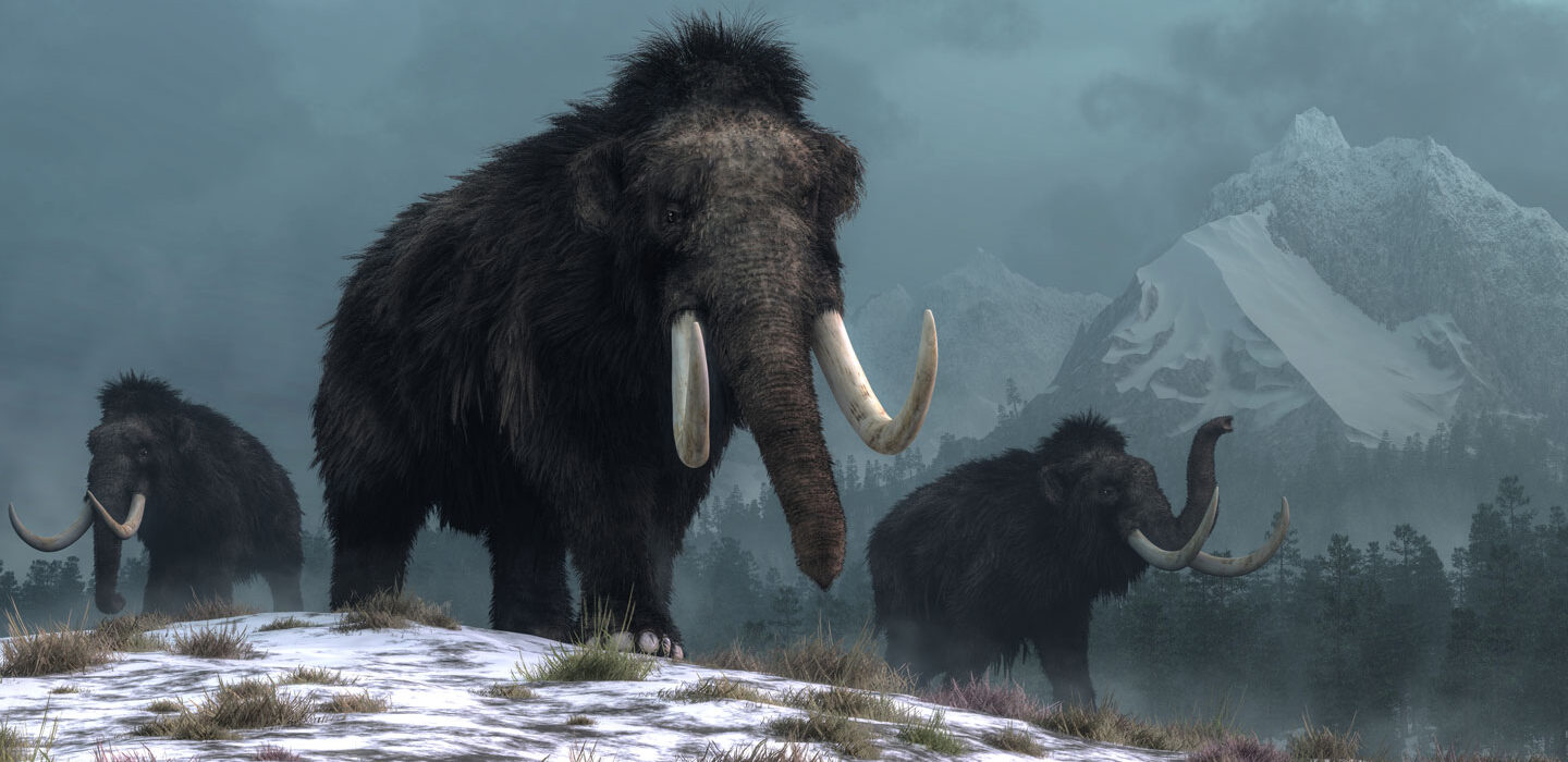 Will the woolly mammoth return? | Science News for Students