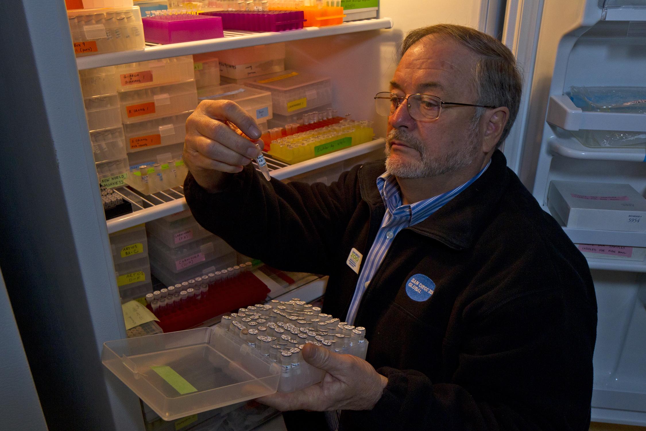 Genetics researcher Oliver Ryder holds up a test tube sample of animal cells