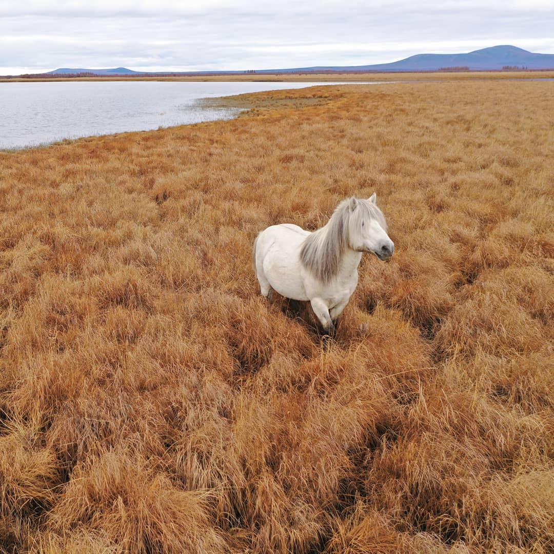 A horse stands among grass in Siberia