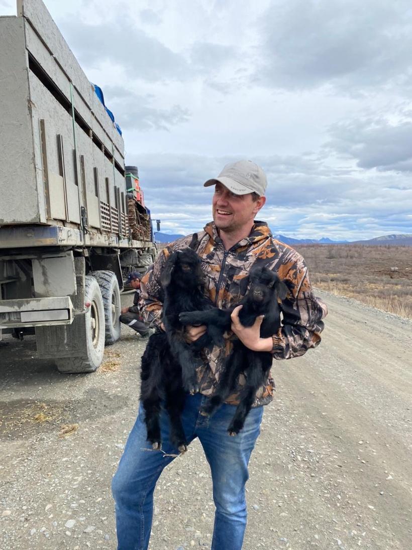 Nikita Zimov holds two baby goats